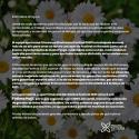 Cartel Primavera Electrónica 2020
