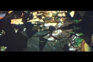 Supine Official video by Tom Geraedts