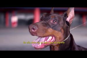 Rap Flamenco (ft El Canelita)