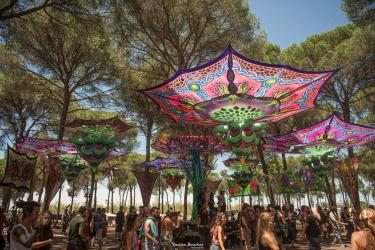 Transition Festival 2021